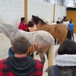 Facebook 6 caballos