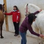 Facebook 7 caballos